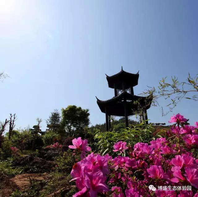 桥头河樱花大道,首届南国牡丹旅游文化节